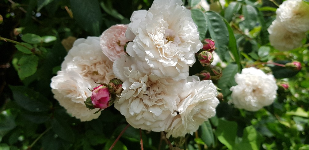 Six on Saturday 16-06-2018