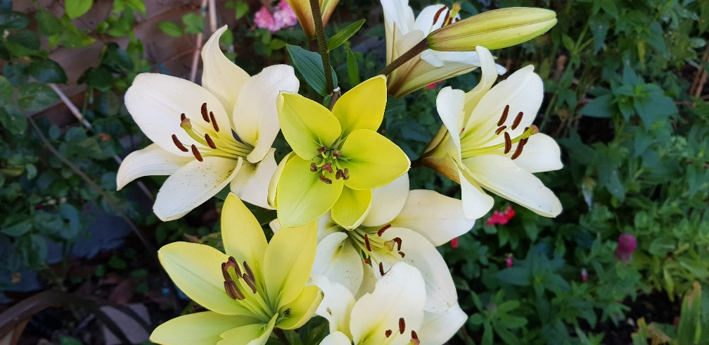 Six on Saturday 23-06-2018