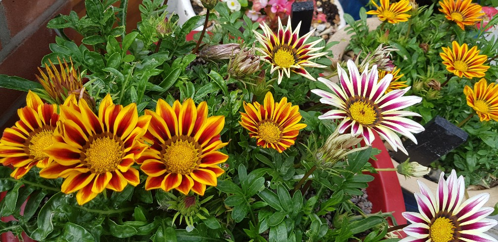 Six on Saturday 18-08-2018