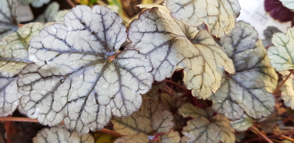 Six on Saturday 10-11-2018