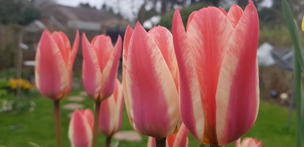 Six on Saturday 23-03-2019